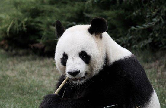 ¿Como saber si me está penalizando Panda?