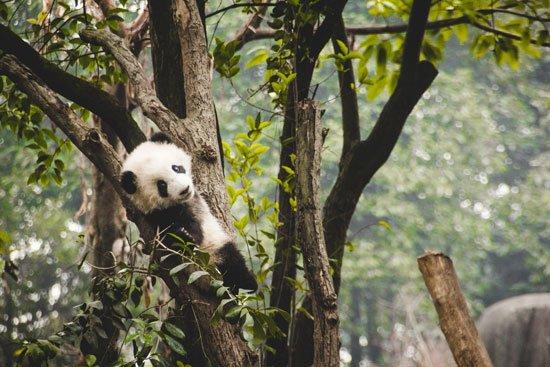 Evitar penalizaciones Panda