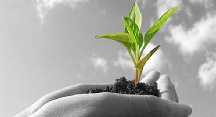 Mejora genética de plantas