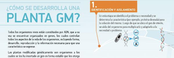Infografia Planta MG