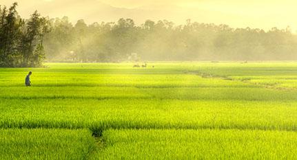 Campo arroz