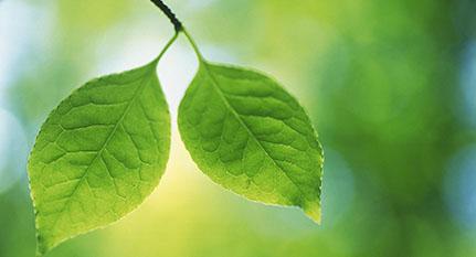 Plantas genética