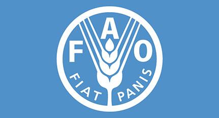 Informe FAO