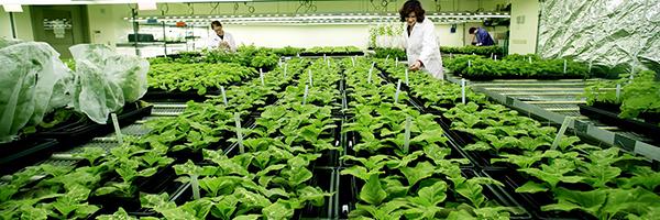 Biotecnología agraria