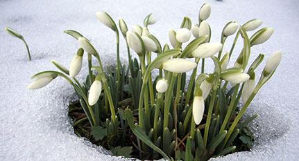 Plantas frío