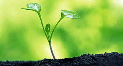 Plantas sequía