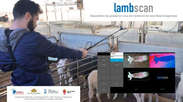 El Lambscan y el ganado ovino