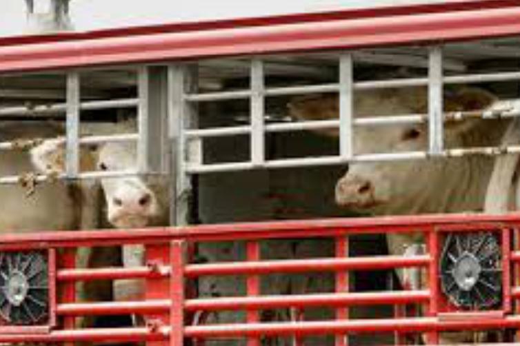 El bienestar animal en el transporte internacional