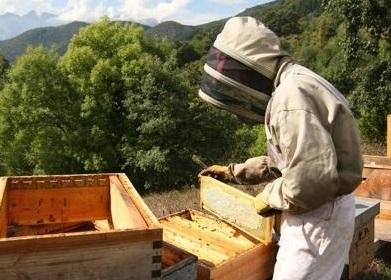 Desacuerdos con los cambios en la nueva normativa apícola