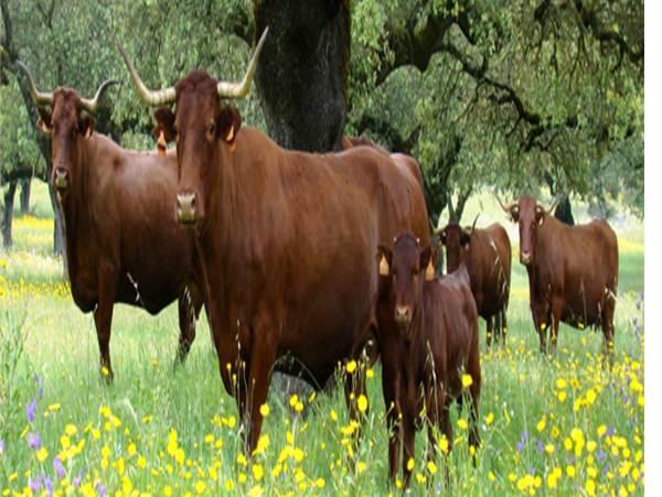 Economía en la producción de vacuno de carne