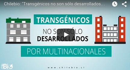 Transgénicos multinacionales