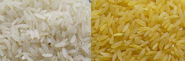 Firmas a favor del arroz dorado